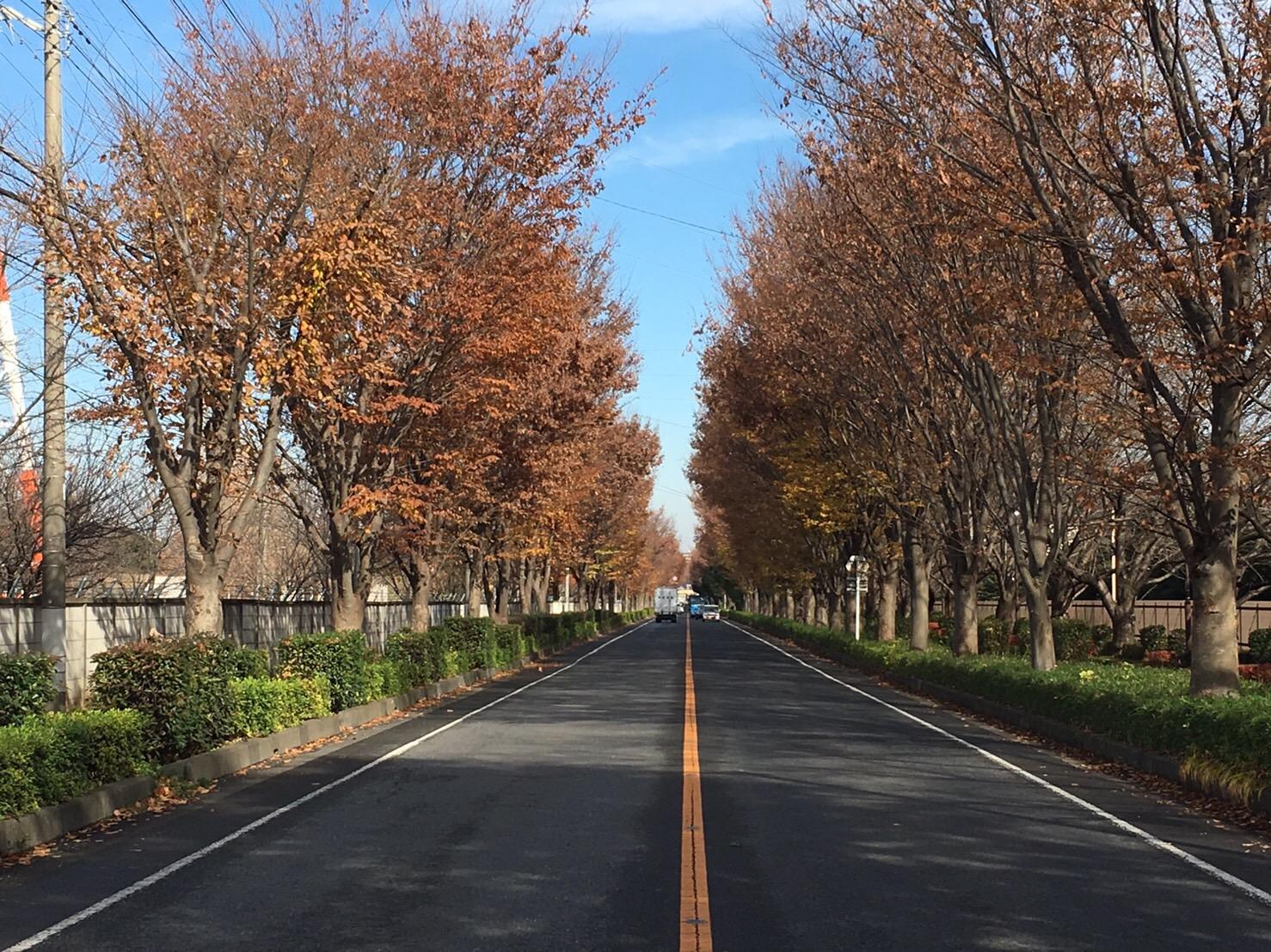 舗装指定修繕工事(東京朝霞線)